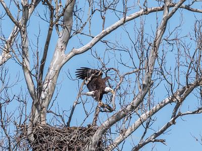 Eagle Nest 31 Mar 2018-4530