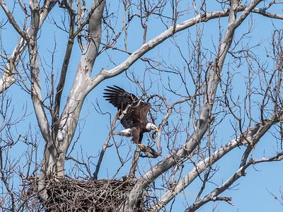Eagle Nest 31 Mar 2018-4529