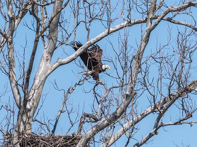Eagle Nest 31 Mar 2018-4503