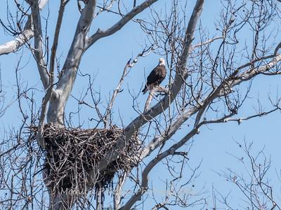 Eagle Nest 31 Mar 2018-4168