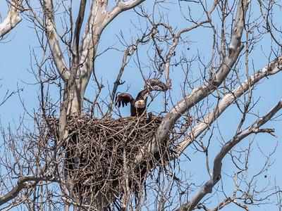Eagle Nest 31 Mar 2018-4563