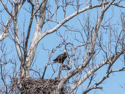Eagle Nest 31 Mar 2018-4532