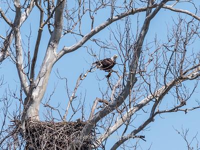 Eagle Nest 31 Mar 2018-4281