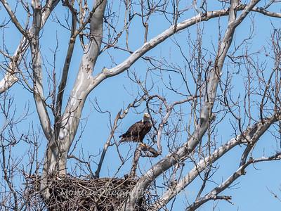 Eagle Nest 31 Mar 2018-4533