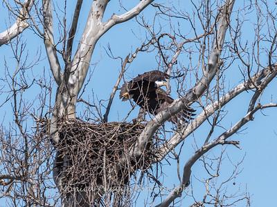 Eagle Nest 31 Mar 2018-4500