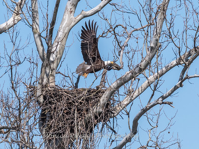 Eagle Nest 31 Mar 2018-4499