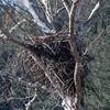 Eagle Nest 3 Feb 2018-2527