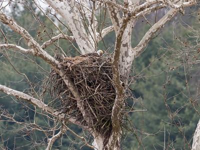 Eagle Nest 2 April 2018-4841