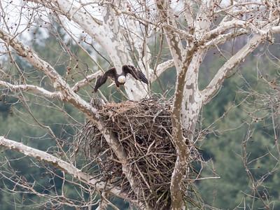 Eagle Nest 2 April 2018-4869