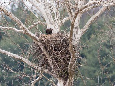 Eagle Nest 2 April 2018-4863