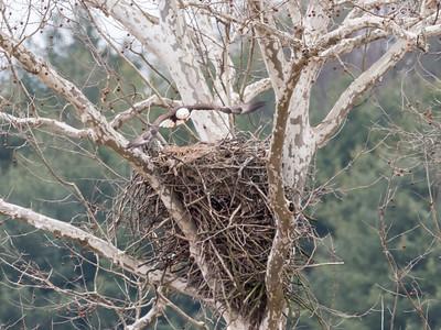 Eagle Nest 2 April 2018-4871