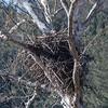 Eagle Nest 3 Feb 2018-2520