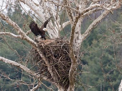 Eagle Nest 2 April 2018-4829