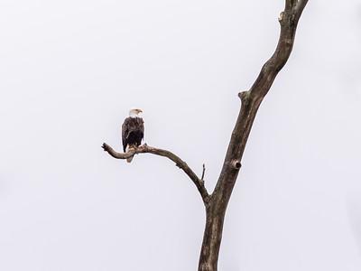 Eagle Nest 2 April 2018-4809