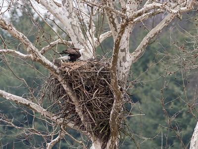 Eagle Nest 2 April 2018-4835