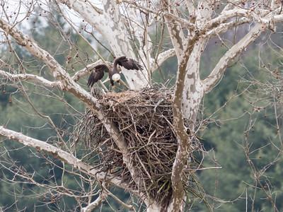Eagle Nest 2 April 2018-4872