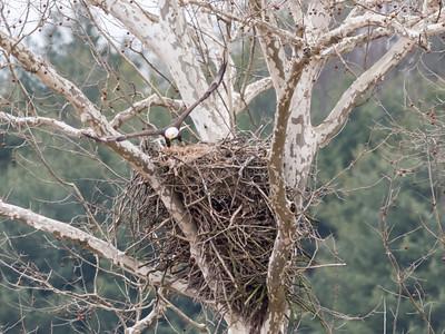 Eagle Nest 2 April 2018-4873