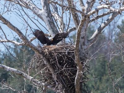 Eagle Nest 26 Mar 2018-3781