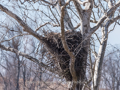 Eagle Nest 3 Feb 2018-2534