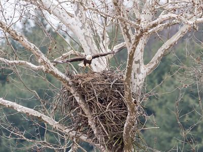 Eagle Nest 2 April 2018-4868