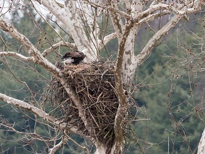 Eagle Nest 2 April 2018-4836