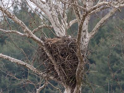 Eagle Nest 2 April 2018-4845