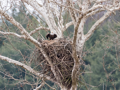 Eagle Nest 2 April 2018-4867