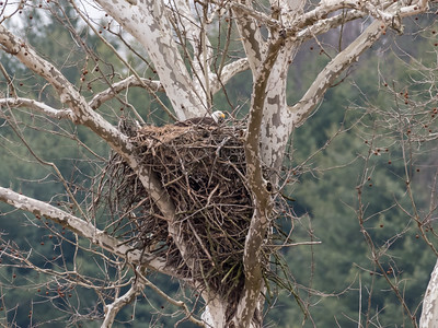 Eagle Nest 2 April 2018-4839