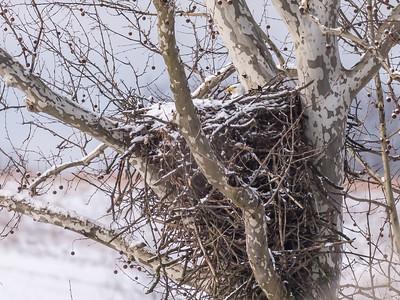 Eagle Nest 18 Feb 2018-3608