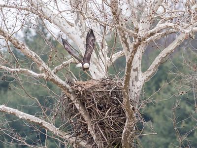 Eagle Nest 2 April 2018-4870