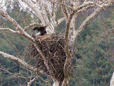 Eagle Nest 2 April 2018-4833