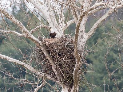 Eagle Nest 2 April 2018-4862