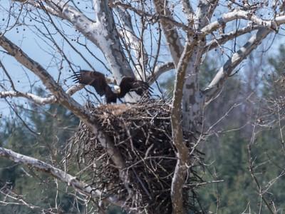 Eagle Nest 26 Mar 2018-3782