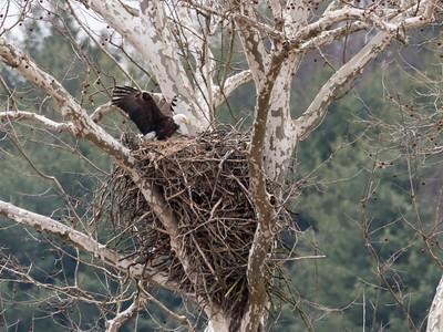 Eagle Nest 2 April 2018-4831
