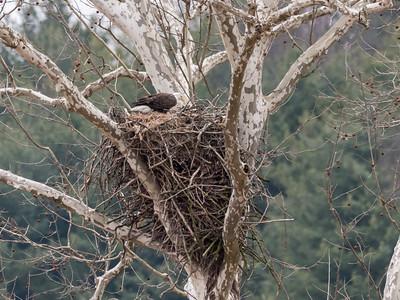 Eagle Nest 2 April 2018-4837