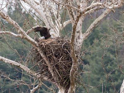 Eagle Nest 2 April 2018-4832