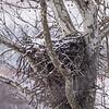 Eagle Nest 18 Feb 2018-3597