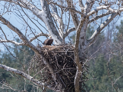 Eagle Nest 26 Mar 2018-3783