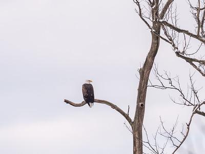 Eagle Nest 18 Feb 2018-3592