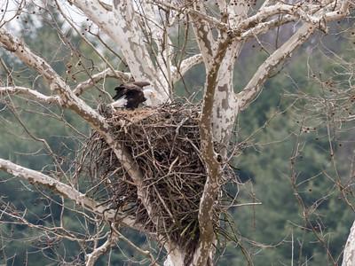 Eagle Nest 2 April 2018-4834