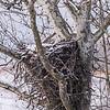 Eagle Nest 18 Feb 2018-3609