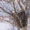 Eagle Nest 18 Feb 2018-3605