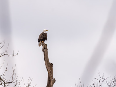 Eagle Nest 2 April 2018-4880