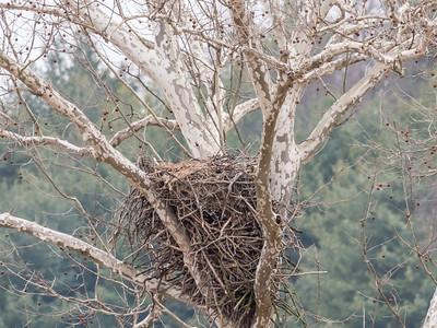 Eagle Nest 2 April 2018-4815