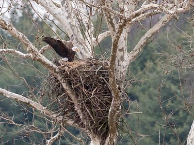Eagle Nest 2 April 2018-4830