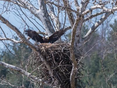 Eagle Nest 26 Mar 2018-3780
