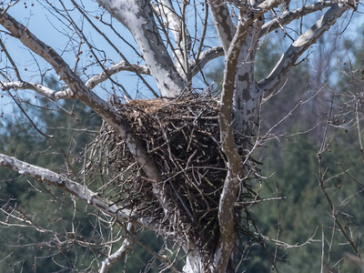 Eagle Nest 26 Mar 2018-3768