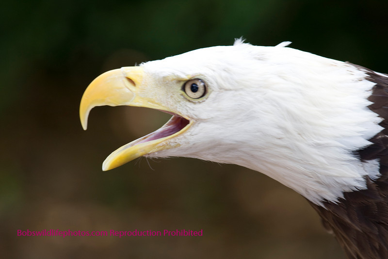 Screaming eagle. Go 101st.