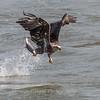 Eagles Conowingo Dam 14 Apr 2018-7493