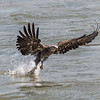 Eagles Conowingo Dam 14 Apr 2018-7492